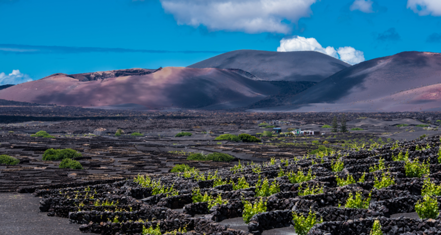 La Geria- Things to do in Lanzarote
